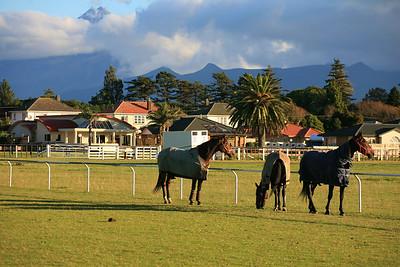 Racehorses at New Plymouth racetrack with Mt Taranaki backdrop
