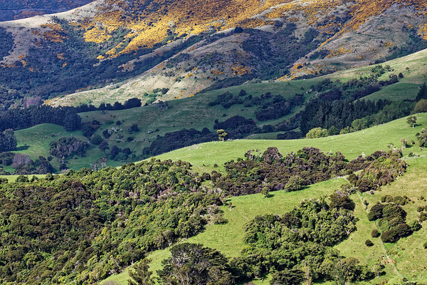 Hills above Akaroa