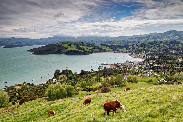 View to Akaroa Harbour on the Banks Peninsula in Vew Zealand's South island