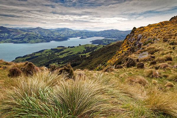 Scenery high on the Banks Peninsula looking down to Akaroa Harbour