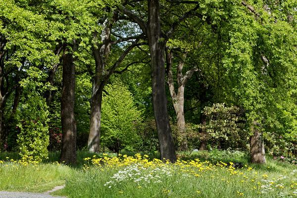 Woodland in  Botanical Gardens in Hagley Park, Christchurch