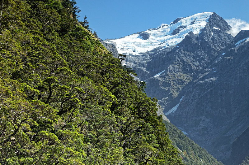 Milford Sound glacier and forest growing on the rock face of a cliff