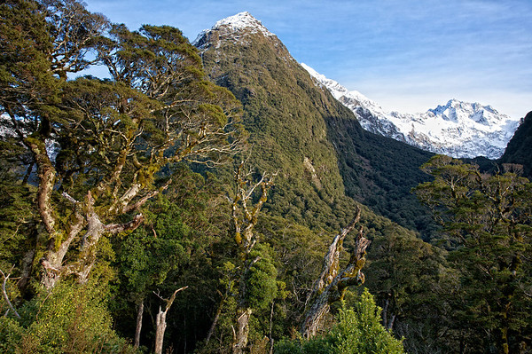 View above Hollyford Valley on the Milford Sound Road, Fiordland National Park