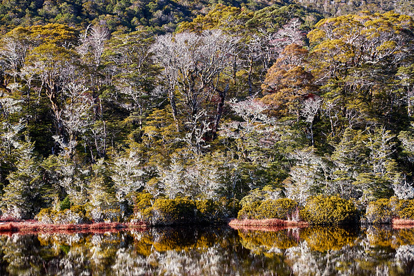 Beech forest and lake on the St James Track in the Lewis Pass of the Southern Alps in New Zealand's South Island