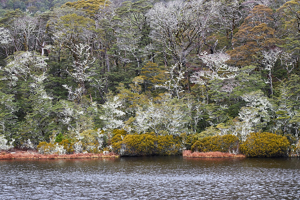 Lake surrounded beech forest decorated with moss on the St James Track in the Lewis Pass of New Zealand's Southern Alps