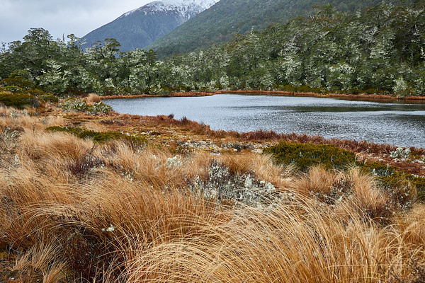 Lake surrounded by tussock grass and beech forest decorated with moss on the St James Track in the Lewis Pass of New Zealand's Southern Alps