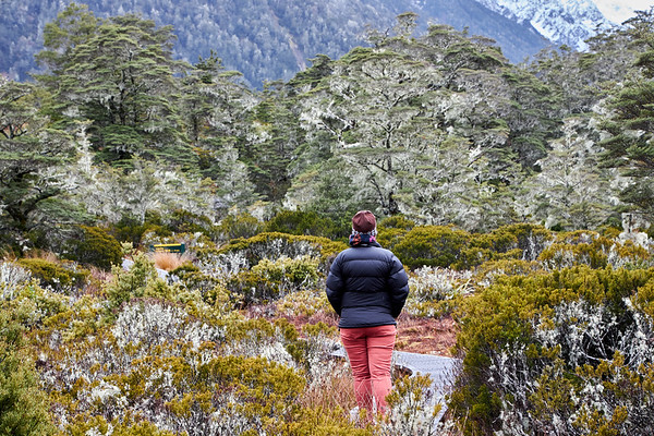 Walker in an lpine wonderland on the St James Track in the Lewis Pass of New Zealand's Southern Alps