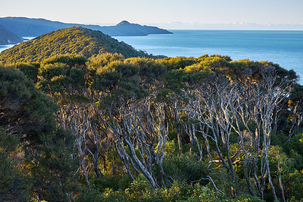 View from the head of the Marlborough Sounds on Queen Charlotte Sound from the nature sanctuary of Motuara Island