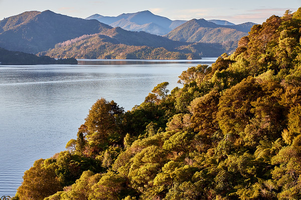 Whenuanui Bay⁩ in Queen Charlotte Sound, ⁨Marlborough⁩