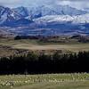 Sheep County