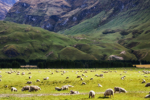 Sheep station in Mt Aspiring National Park, Otago