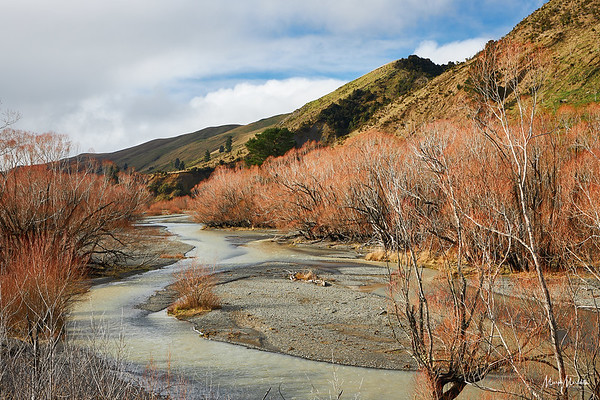 Braided river colonised by willows near Mount Lyford