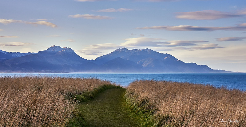 On the Kaikoura Peninsula Walkway which takes you along a spectacular cliff top track above colonies of seals, with views across the ocean to snow capped mountains