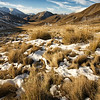 Melting snow on tussock grass, Lindis Pass