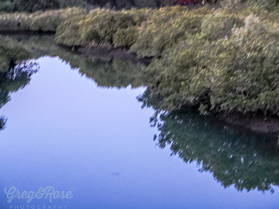 Reflections in a creek