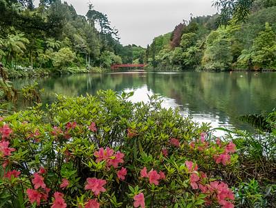 Lake at Pukekura Park