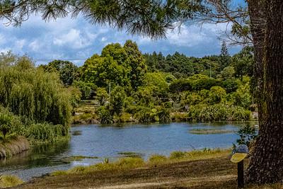 Pond at Botanic Garden