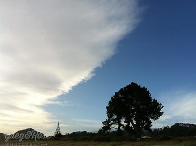 Beach Sky and Trees Cooks Beach NZ.