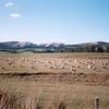 New_Zealand-301