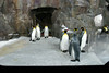 We visit Kelly Tarlton's Antarctic Encounter and see some penguins.