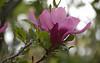 ABG: Backlit magnolia