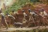 Tawhiti Museum: Closeup of miniature diorama