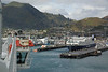 Busy Picton Harbour