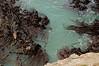 Kelp swirling against the rocks
