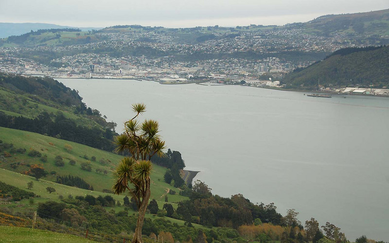 Looking back to Dunedin from high on Otago Ridge