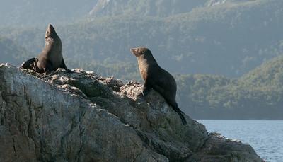 Pickersgill harbor and New Zealand fur seals.