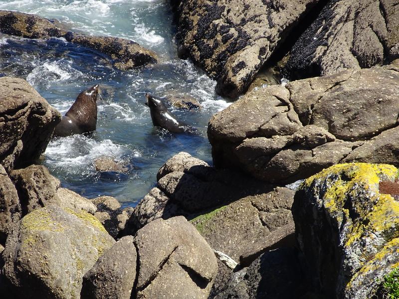 Fur seal mama and pup, on Tauranga Bay