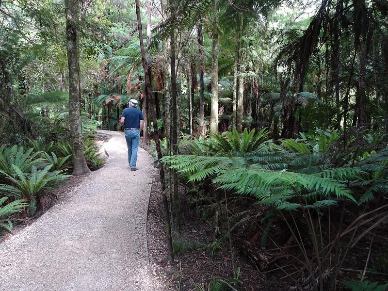 Approaching Waikoropupu Spring on a trail
