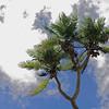 Tonga One - Nuku Alofa 3_10 024