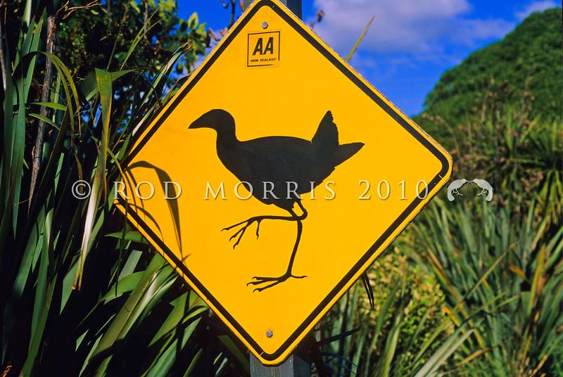 11001-51108  Pukeko (Porphyrio melanotus melanotus) crossing sign