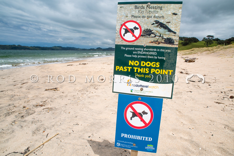 DSC_3678 Northern NZ dotterel (Charadrius obscurus aquilonius)  a specially designated dotterel breeding area is indicated by this public warning sign. Increasing numbers of summer holiday makers, along with growing pressure from coastal subdivision development, brings more humans to these beaches every summer. People who defy such signs, by walking dogs, riding horses or driving their vehicles through protected areas such as this, place endangered nesting dotterels at further risk. Cooks Beach, Mercury Bay *