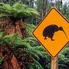 11001-02212  Okarito brown kiwi, or rowi (Apteryx rowi) road sign warning motorists *