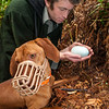 DSC_1302  Okarito brown kiwi or rowi (Apteryx rowi) DoC officer Iain Graham with kiwi dog Rein, remove rowi egg from burrow *