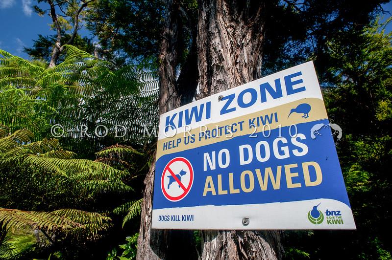 DSC_6665 Stewart Island brown kiwi, or tokoeka (Apteryx australis lawryi) throughout NZ there are signs warning that dogs kill kiwi.