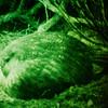 11001-70922  Kakapo (Strigops habroptilus) view through a 'night vision' camera of a Stewart Island  male booming on Arena Ridge after dark *