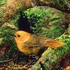 11001-80422 Yellowhead, or mohua (Mohoua ochrocephala) female on beech trunk, Catlins forest.