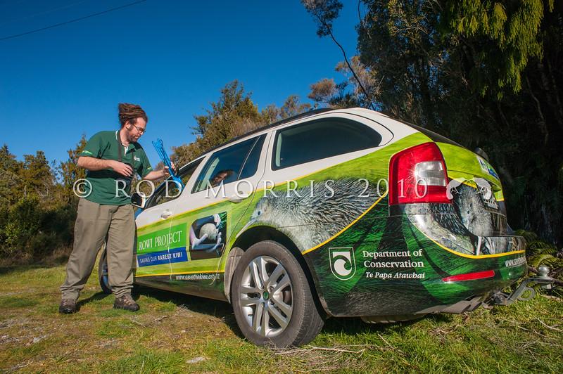 DSC_1131  Okarito brown kiwi, or rowi (Apteryx rowi) DoC officer Duncan Kay with Rowi Project vehicle *