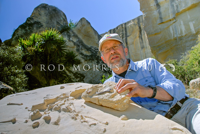 DSC_ 0274 Prof R. Ewan Fordyce, Geology Dept, Otago University, with fossils of Platydyptes, an Oligocene penguin, uncovered at Earthquakes near Duntroon, in northern Otago *