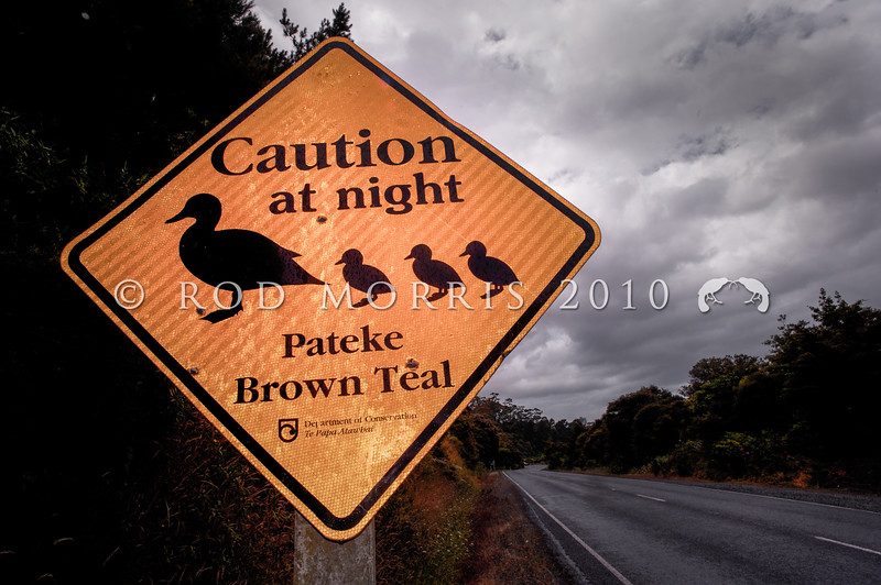 DSC_6729 Brown teal (Anas chlorotis) road sign on a wet night, warns drivers that these vulnerable little ducks may cross roads after dark.