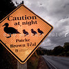 DSC_6729 Brown teal, or pateke (Anas chlorotis) road sign on a wet night, warns drivers that these vulnerable little ducks may cross roads after dark *