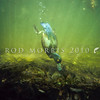 11001-44715  New Zealand Scaup (Aythya novaeseelandiae) male diving underwater. Christchurch *