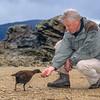 11000-10005 Stewart Island weka (Gallirallus australis scotti) with Sir David Attenborough on Ulva Island during the filming for 'Life of Birds' *