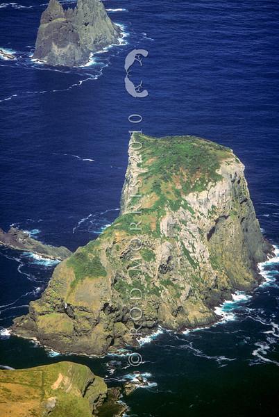 11001-82117 Black robin, or kakaruia (Petroica traversi) habitat. Aerial view of Little Mangere Island
