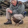 11000-10004 Stewart Island weka (Gallirallus australis scotti) with Sir David Attenborough on Ulva Island during the filming for 'Life of Birds' *