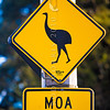 DSC_8101309 South Island giant moa (Dinornis robustus) this road sign was a mischievous response to publican Paddy Freaney's 'sighting' of a moa (near his Bealey River Hotel) in 1993, which caused an international media sensation. In reality moa have long been extinct, they were wiped out by polynesian colonists as early as 1500 *