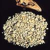 11001- 01107 North Island giant moa (Dinornis novaezealandiae) skull and crop stones from Te Papa museum *